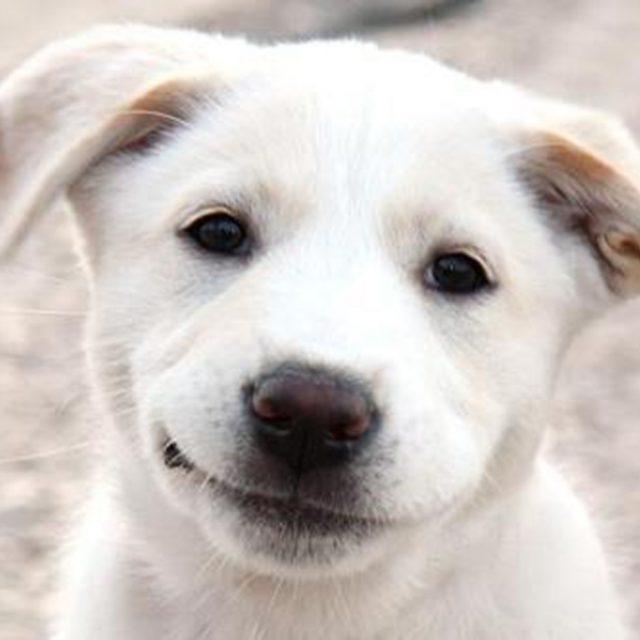 smiling-dog